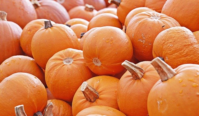 Fall Festivities Await at Chapel Hills Farm & Nursery